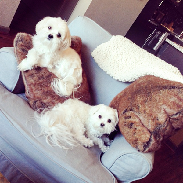 Screen Shot 2013-11-13 at 5.54.11 PM